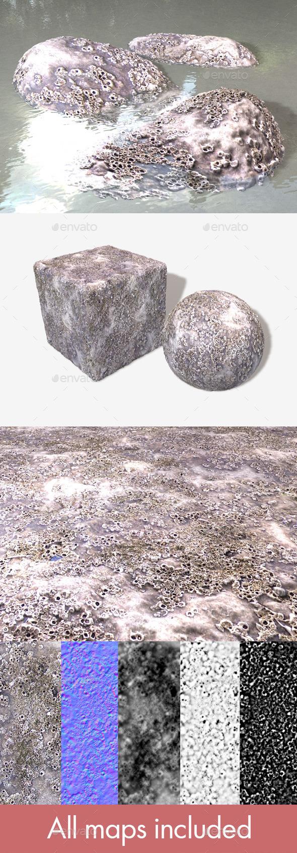 3DOcean Barnacle Crustacean Seamless Texture 10755940