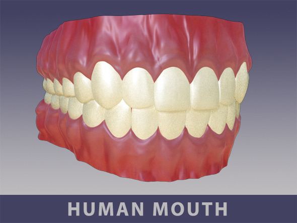 3DOcean Full Mouth Set 10764991
