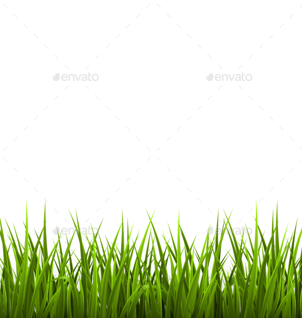 GraphicRiver Green Grass Lawn Isolated on White 10766101