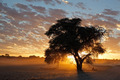 African sunset with silhouetted tree - PhotoDune Item for Sale