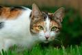 Adorable cat portrait - PhotoDune Item for Sale