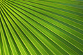 Texture of Green palm Leaf - PhotoDune Item for Sale
