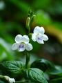 White wildflowers - PhotoDune Item for Sale