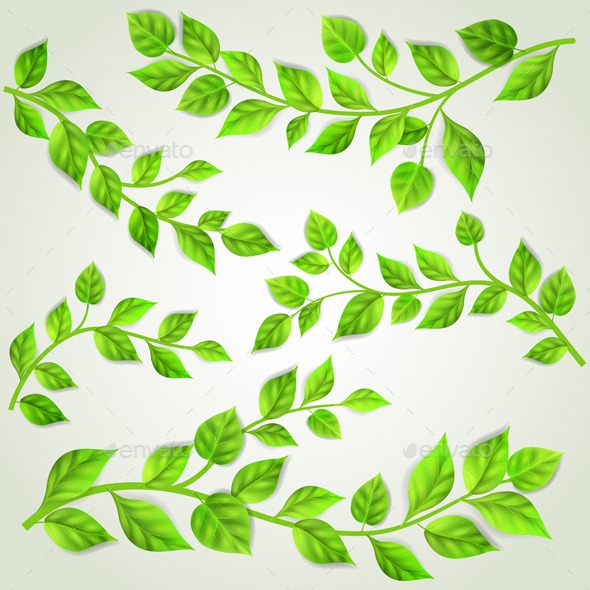 GraphicRiver Set of Branches With Green Leaves 10780605