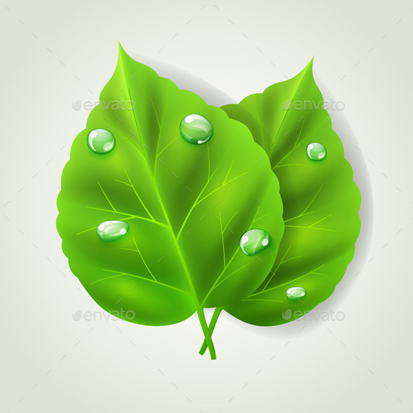 GraphicRiver Two Green Leaves 10780615