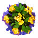Bouquet of yellow fresia flower - PhotoDune Item for Sale