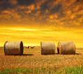 Straw bales  - PhotoDune Item for Sale