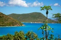 Papaya tree over Leinster Bay - PhotoDune Item for Sale