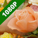 Putting Rose In Bouquet - VideoHive Item for Sale