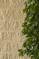 Textured wall with greenery - PhotoDune Item for Sale