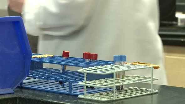 Lab Personnel Sorting Specimens