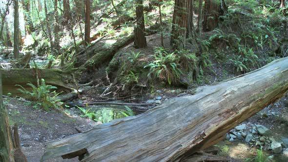 Muir Woods 5 Of 7