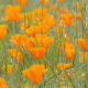 Green Meadow with Flowers - VideoHive Item for Sale