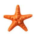 Orange starfish - PhotoDune Item for Sale