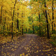 Pathway in the autumn forest - PhotoDune Item for Sale