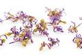 dry iris flowers - PhotoDune Item for Sale