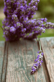 Fresh lavender - PhotoDune Item for Sale