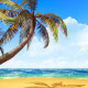 Palm On The Beach - VideoHive Item for Sale