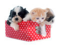 puppy, kitten and chick - PhotoDune Item for Sale