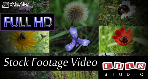 Stock Footage Video