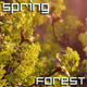 Spring Forest - VideoHive Item for Sale