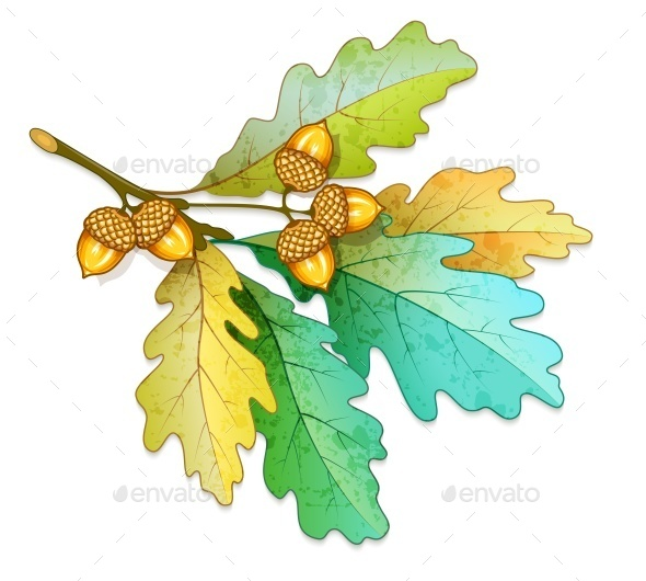 GraphicRiver Oak Tree Branch with Acorns and Dry Leaves 10820389