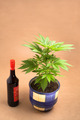 Cannabis and alcohol - PhotoDune Item for Sale