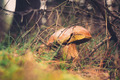 Wild mushroom in the forest - PhotoDune Item for Sale