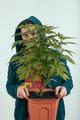 Man holding cannabis plant - PhotoDune Item for Sale