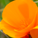 Orange Flower - VideoHive Item for Sale