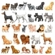 Dog Collection - GraphicRiver Item for Sale