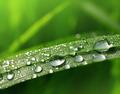 dew drop  - PhotoDune Item for Sale