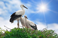 storks on the sky background - PhotoDune Item for Sale