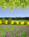 Purple flowers on meadow - PhotoDune Item for Sale
