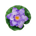 Purple artificial water lily flower isolated on white background with working path - PhotoDune Item for Sale