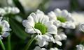 White Flower - PhotoDune Item for Sale