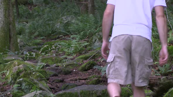 A Hiker Walking Through The Forest 1 Of 3