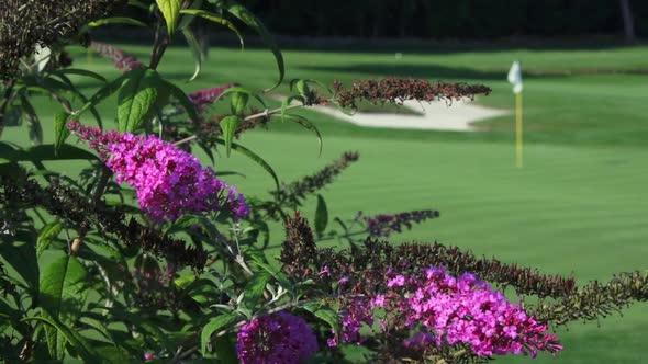 Lush Fun Golf Course 3 Of 4