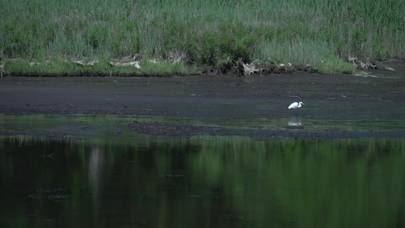 VideoHive Heron In Marsh 1 Of 2 10846319