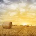 Straw Bales on Farmland - PhotoDune Item for Sale