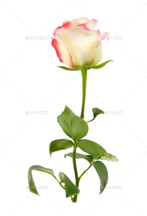 GraphicRiver Realistic Rose 10852992