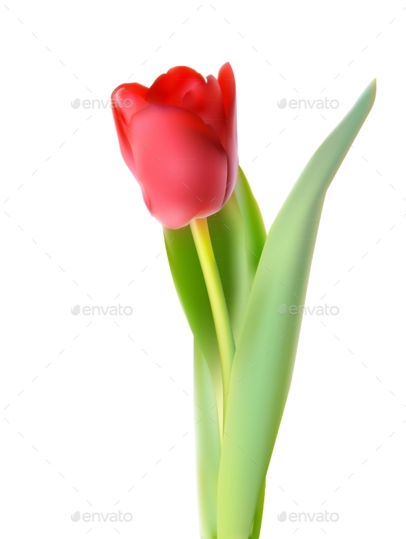 GraphicRiver Tulip Illustration 10853014