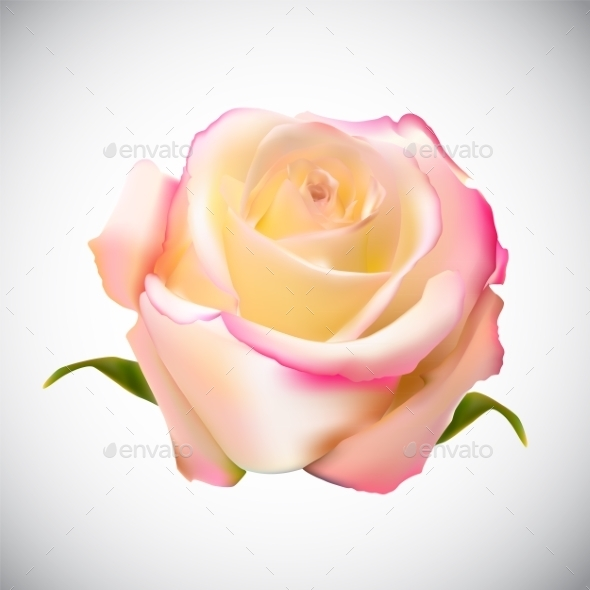 GraphicRiver Rose 10853206