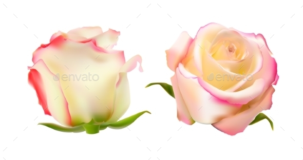 GraphicRiver Roses 10853263
