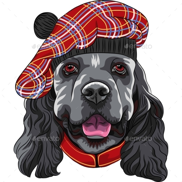 GraphicRiver American Cocker Spaniel in Scottish Tam 10853642