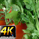 Parsley and Tomato 1 - VideoHive Item for Sale