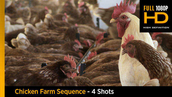 Chicken Farm Sequence 4 shots