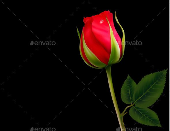 GraphicRiver Red Rose 10861143