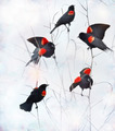 Red Winged Blackbirds - PhotoDune Item for Sale