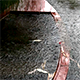 Sunken Boat in the Lake and Rain 2 - VideoHive Item for Sale